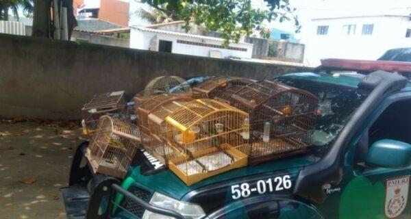 Polícia Ambiental apreende 38 pássaros silvestres em Figueira