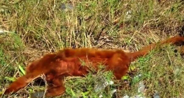 Macaco é encontrado morto em Cabo Frio