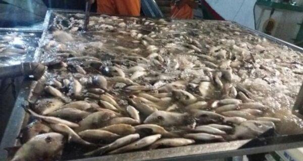 Guarda Marítima de Arraial distribui 51 toneladas de peixe