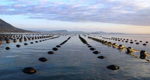 Ministério Público recomenda suspensão de licença ambiental para fazenda marinha do Peró