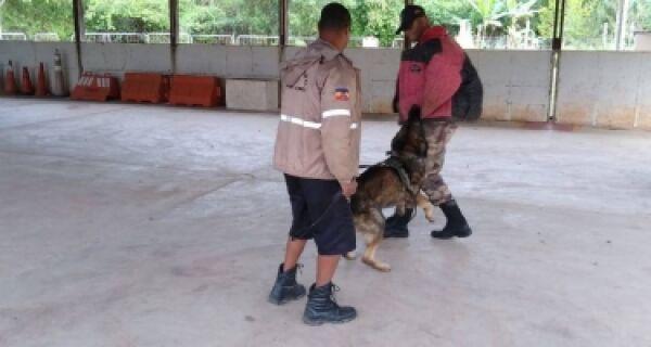 Prefeitura de Búzios estuda projeto para utilização de cães no apoio ao trabalho da Guarda Municipal