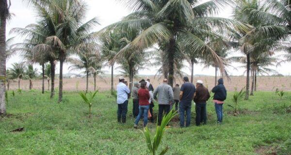São Pedro recebe comitiva estadual para projeto em prol da recuperação de coqueirais