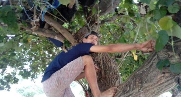 Na árvore, uma casa nada aconchegante