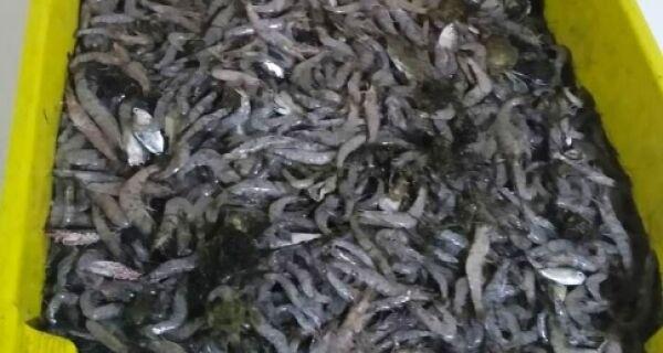 Fiscais apreendem 20kg de camarão pescados ilegalmente durante defeso da lagoa