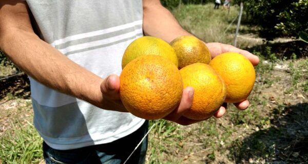Rio de Janeiro será o primeiro estado do país a ter indicação geográfica da laranja