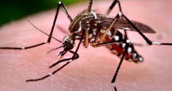 Cabo Frio alerta para incidência de mosquito da dengue no verão