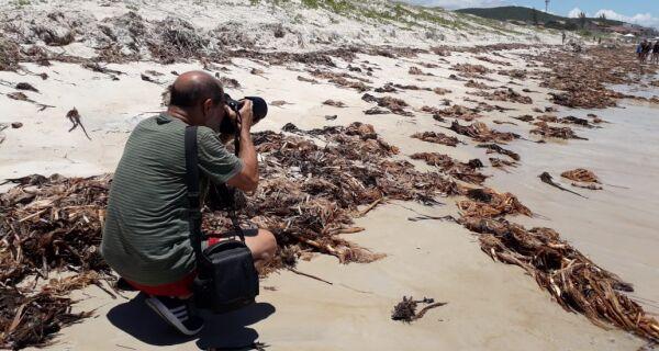 Prefeitos vão à justiça por conta de chegada de vegetação nas praias