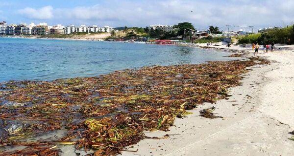 Municípios retiram vegetação que chegou às praias da região