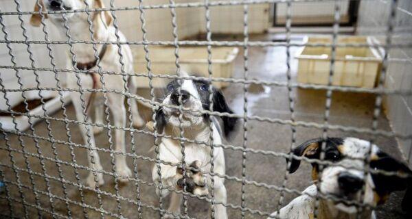 Maus tratos contra animais lidera denúncias do Linha Verde