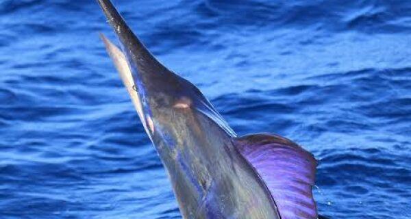 Cabo Frio recebe torneio de pesca Marlim Invitational