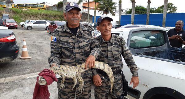 Guarda Ambiental de Iguaba Grande resgata filhote de jacaré