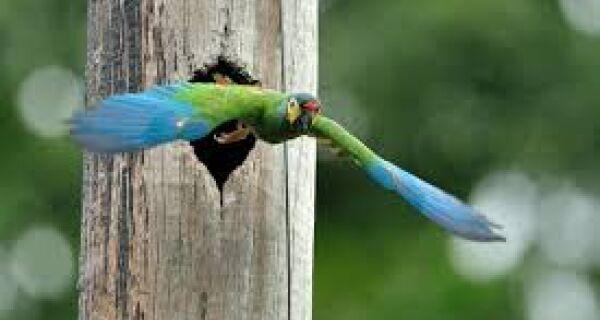 Parque localizado no estado do Rio de Janeiro é um dos melhores do mundo para observação de aves