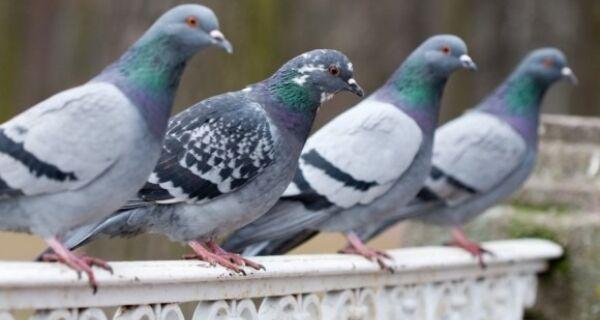 Vigilância Sanitária de Cabo Frio intima lanchonete após invasão de pombos