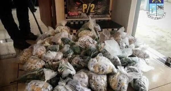 PM faz mega-apreensão de drogas na Fazendinha, em Araruama