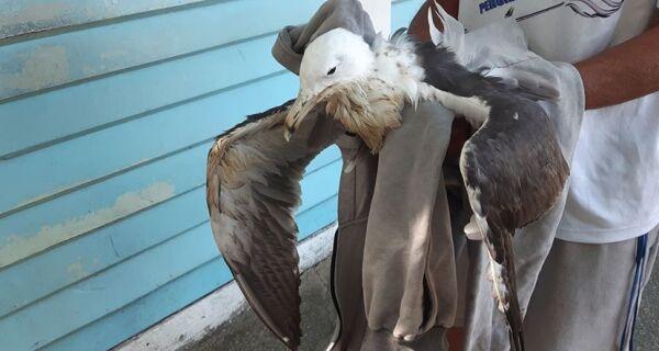 Guarda Marítima resgata ave ferida no bairro da Passagem