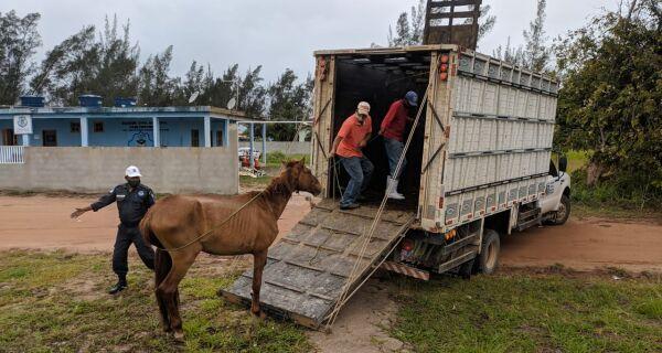 Prefeitura resgata cavalo solto em Tamoios, Cabo Frio