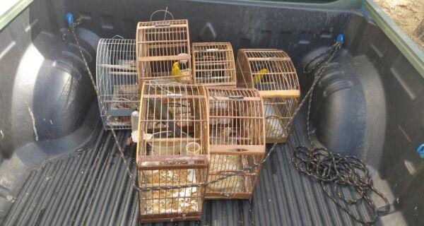 Pássaros silvestres são resgatados de cativeiro em Cabo Frio após denúncia do Linha Verde