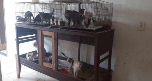 Prefeitura de Cabo Frio intensifica campanha de adoção de animais