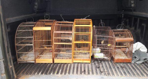 Polícia resgata pássaros mantidos em cativeiro em Araruama