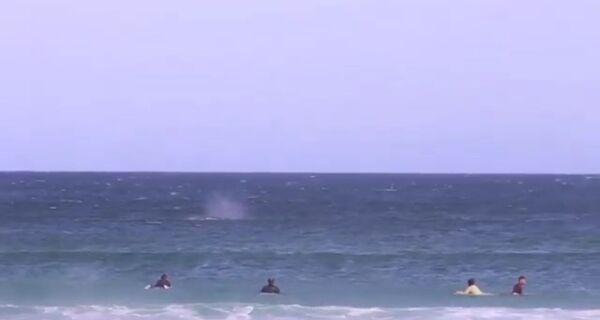 Baleia surpreende surfistas em praia de Arraial do Cabo