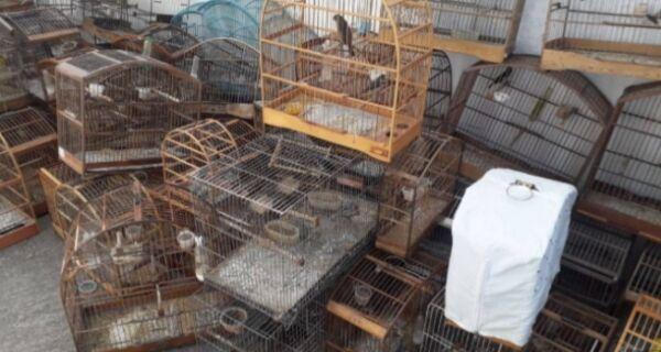PM e Prefeitura de Cabo Frio fazem nova apreensão de aves silvestres em cativeiro