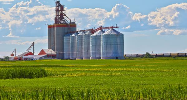 Produção de grãos sinaliza recorde final e pode estimular investimento em produção