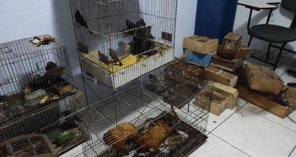 Prefeitura desbarata quadrilha que traficava animais silvestres no distrito de Tamoios