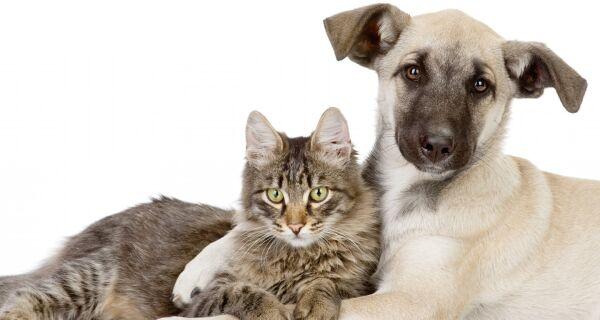 Vacinação antirrábica para cães e gatos começa nesta quarta (2) em Cabo Frio