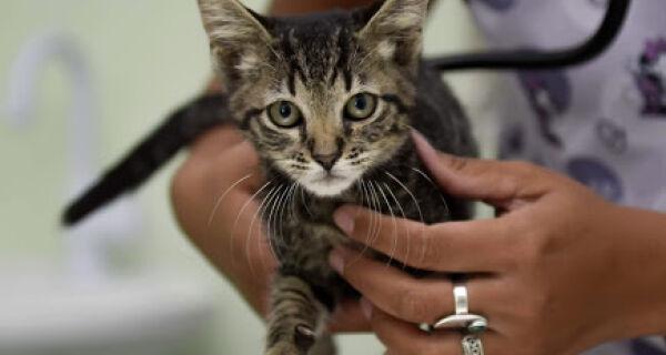 Clínica Veterinária de Cabo Frio promove campanha de castração popular para cães e gatos