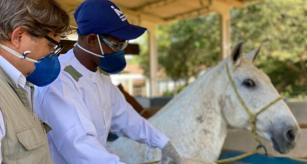 Pesquisa descobre soro retirado de cavalos que pode ser usado no combate ao coronavírus