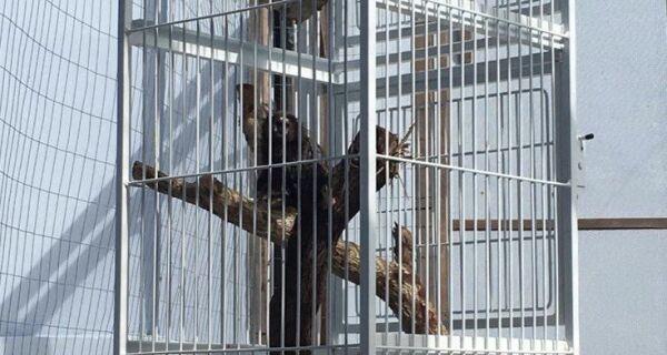 Meio Ambiente captura animal silvestre ferido em Cabo Frio