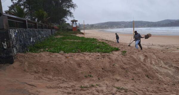 Prefetura de Búzios retira vegetação reposta indevidamente na Praia de Geribá, após determinação do Ministério Público Federal