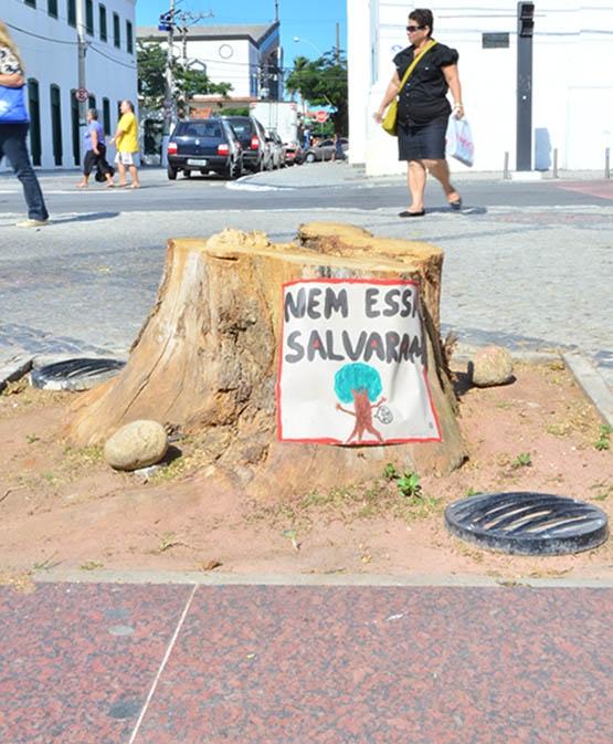 Derrubada de árvore na Praça Porto Rocha causa polêmica e indignação em Cabo Frio