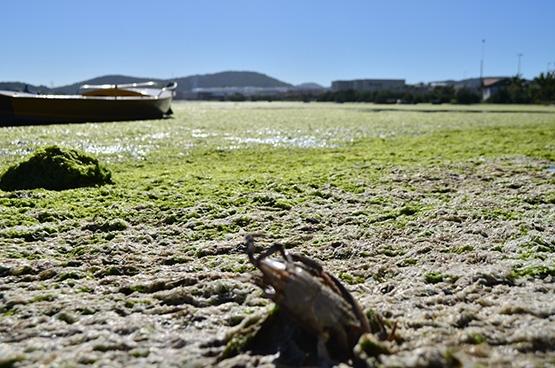 Shopping Park Lagos reconhece problema com proliferação de algas na Lagoa de Araruama