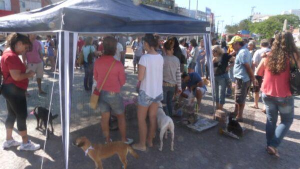 ONG promove feira de adoção de animais na Praça Porto Rocha