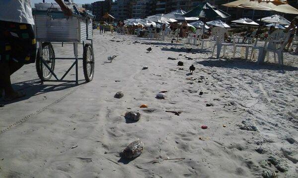 Grande quantidade de peixes mortos na areia impressiona banhistas na Praia do Forte
