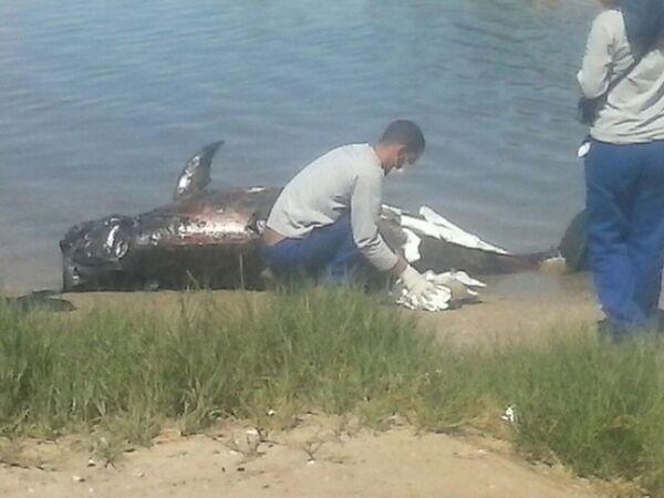 Golfinho é encontrado morto na Ilha do Japonês, em Cabo Frio