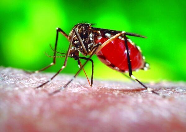 Casos de dengue em Cabo Frio ultrapassam os 700